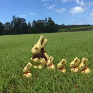 Bunnies in the Blue