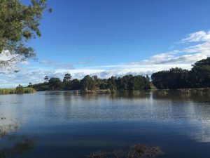 Our water paddocks. Great for Eels and Fish
